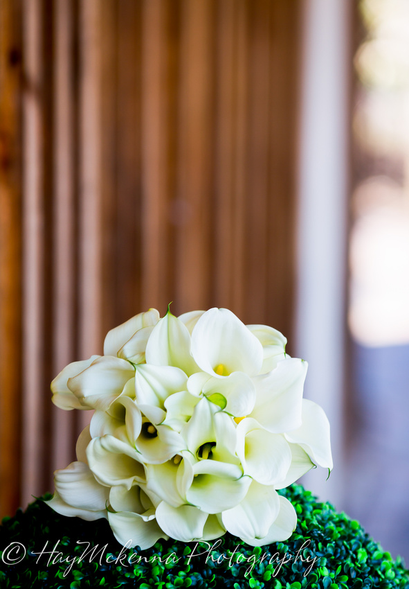 Shade Tress and Evergreens Wedding 106